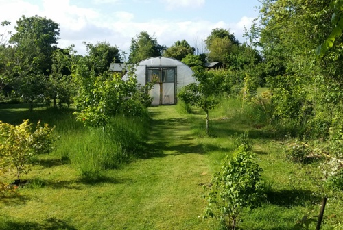 Polytunnel and Orchard