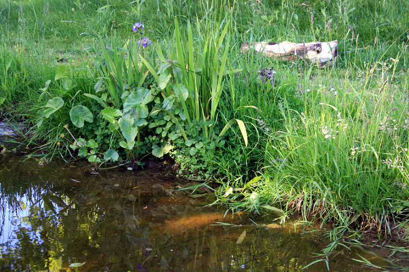 How to build your own wildlife pond 1 for Garden pond edging
