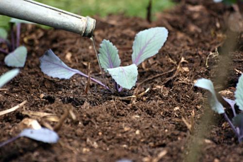 Home made garden compost