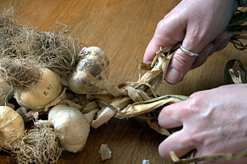 Gradually add more garlic bulbs until you have used all your bulbs