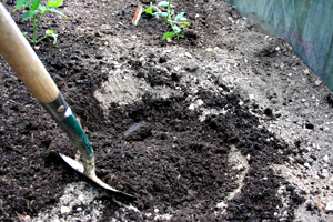 Prepare your planting hole with well rotted compost