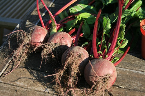 The first of this years Beetroot.