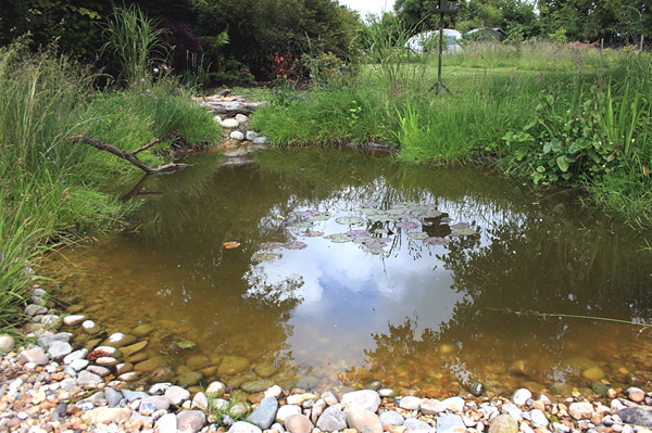 How to build your own wildlife pond 1 for Small pond construction