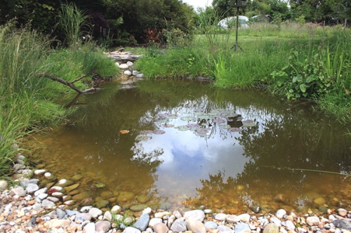 Try building a wildlife pond