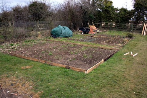 Plan to turn this into a gorgeous scented cut flower garden