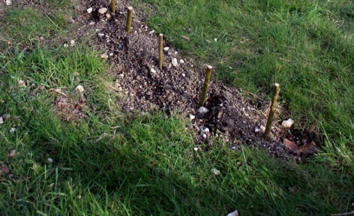 How to plant a willow arbour