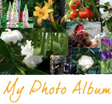 Some of my favourite photos taken in the garden at Blackbirds