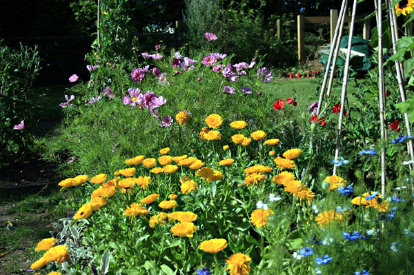 How To Design And Build Your Own Cut Flower Garden