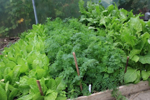 Would You Like To Grow Your Own Vegetables