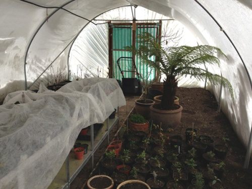 Winter in the polytunnel