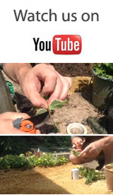 How To Make Your Own Potting Compost