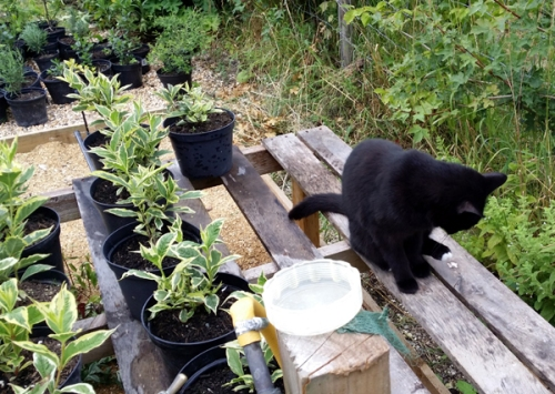 How to start a plant nursery