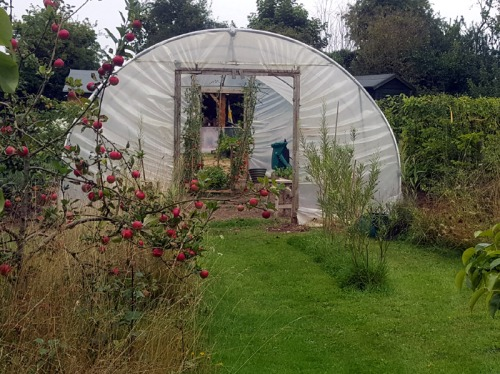 My Polytunnel
